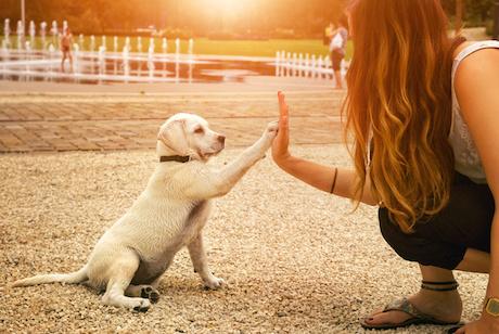 Corsi per cuccioli